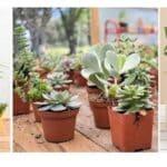 NurseryLive free plants